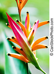 Colorful tropical flower