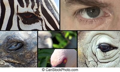 Eyes, collage - Close up of animal and human eyes, montage