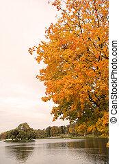 lakeside, träd, vissnande