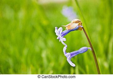 caracol, en, el, azul, flor,