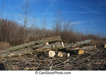 Lumber industry - Exploitation of wood in forest