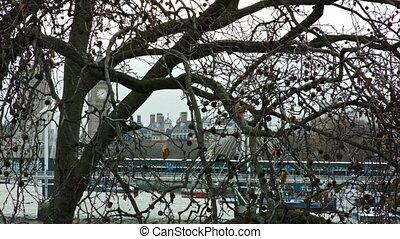 Big Ben through a tree - View of the Big Ben through a tree