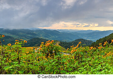 Landscape sunset nature flower Tung Bua Tong Mexican...