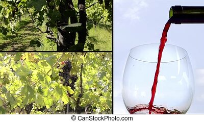 vines and wine composition