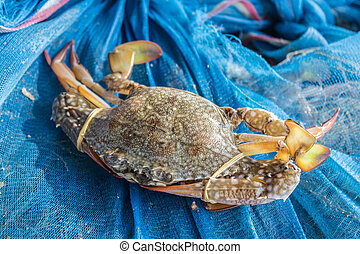 Crab or blue crab, blue manna crab, sand crab. - Crab or...