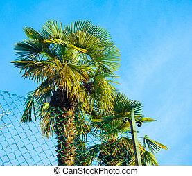 Palm tree - A tropical palm tree over the blue sky
