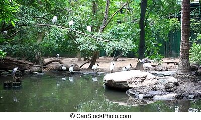 storks in the jungle sitting on tree and pond - storks in...