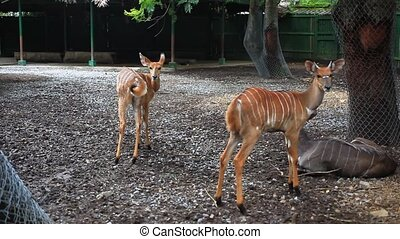 Roe deers in Safari Park Bangkok - Roe deer in Safari Park...