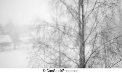 falling snow against a blurred background tree