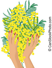 mimosa - graphic illustration of a mimosa