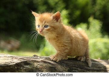 adorable, rojo, gatito, Montañismo, el, árbol,...
