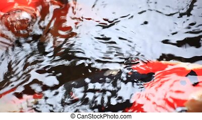 Koi fishes feeding in a pond Close up - Koi fishes feeding...
