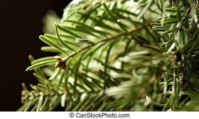 Coniferous Tree Rotate on a Dark Background