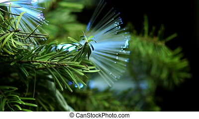 Coniferous Tree with Blue Fiber Rotate on a Dark Background