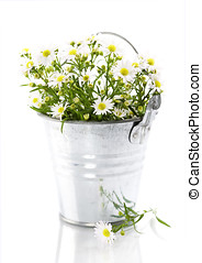 White flowers in a pot over white