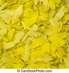 Flower leaves pattern, background - Background of flower...