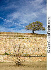 Monte Alban Oaxaca small tree and bush on the slopes of...