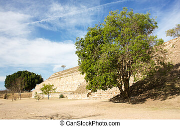 Monte Alban Oaxaca tree next to pyramid