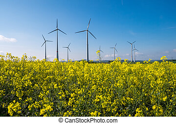 Rapeseed with wind engines - A rapeseed field with wind...