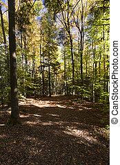 Fall Foliage Pathway