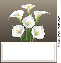 Calla lily - greeting card, anniversary, background.