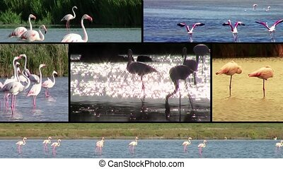 Flamingos, collage - Wonderful flamingos montage