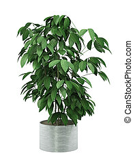 bush plant in pot culture on white background,