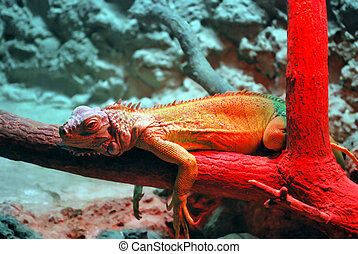 Reptile On Red - Lazy Reptile, Lizard on the tree under Red...