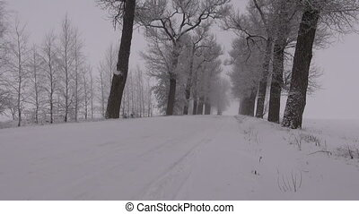 car driving on snowy old rural road with tree alley and...