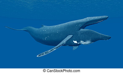Humpback Whale - Computer generated 3D illustration with a...