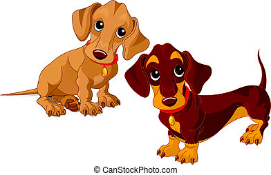 Dachshunds - Two isolated dachshunds on the white background