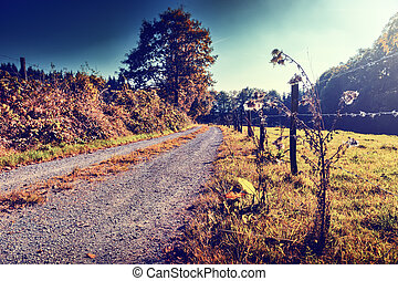 Beautiful autumn landscape with country road