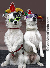 Funny Dogs - Two dogs, wearing sunglasses, are clowning...