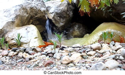 Autumn maple and waterfall - Red maple leaves hanging from...