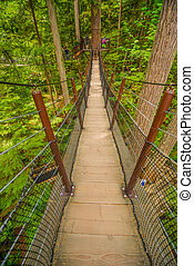 Pedestrian suspension bridge - Vertical pedestrian...