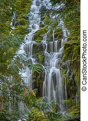 Proxy Falls in Oregon - Beautiful cascades of Proxy Falls in...