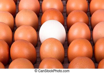 Healthy Organic Eggs - Healthy organic eggs, white egg...
