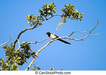 wild bird - Flighting wild birds on sky near samall lake