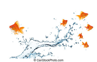 different way - goldfish going separate way, different from...