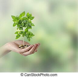 investir, Para, verde, negócio,