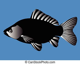 black fish - beautiful black fish - vector
