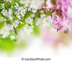 Spring blossoms background - Spring border background with...
