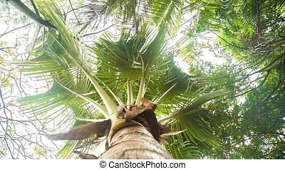 Palm tree from bottom