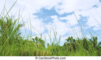 tropical nature background - looking up from the ground with...