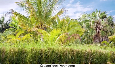 tropical nature background in mauritius