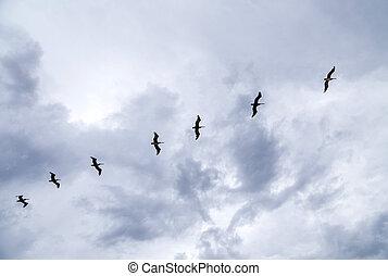 birds flying in rain over the ocean - birds flying in heavy...