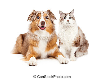 Cat and Happy Dog Together - A cute cat and happy Australian...