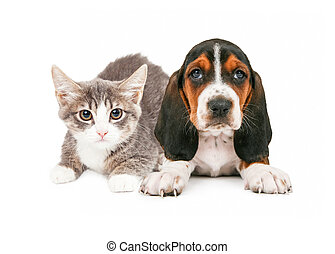 Basset Hound Puppy and Kitten - A cute little kitten and...