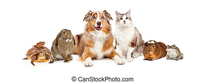 Domestic Pet Composite - Group of domestic animals sized to...