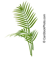 tropical plant fernleaf hedge bamboo branches on white...